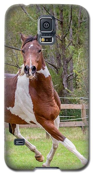 Paint Mare In Field Galaxy S5 Case