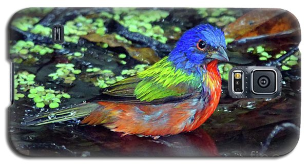 Painted Bunting After Bath Galaxy S5 Case