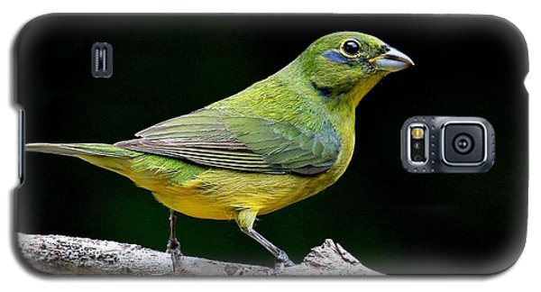 Painted Bunting - Second Year Male Galaxy S5 Case