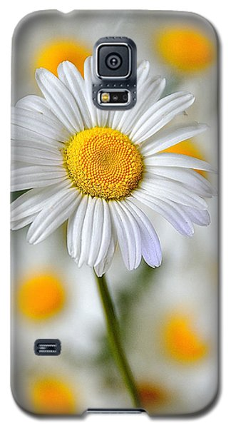 Painted Daisies Galaxy S5 Case