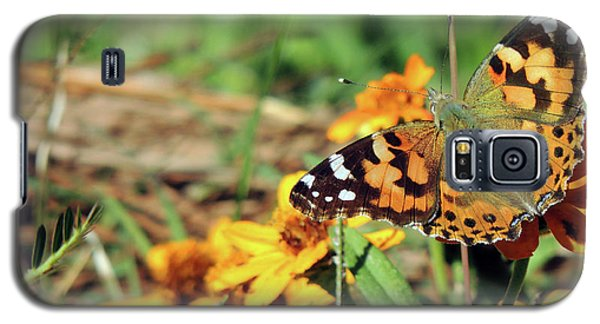 Painted Lady On Zinnia Galaxy S5 Case