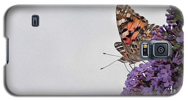 Painted Lady (vanessa Cardui) Galaxy S5 Case by John Edwards