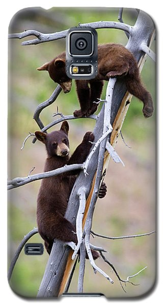 Pair Of Bear Cubs In A Tree Galaxy S5 Case