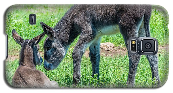 Galaxy S5 Case featuring the photograph Pair Of Burros by Jerry Cahill