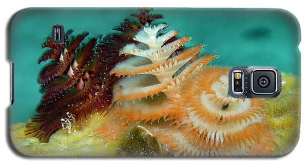 Galaxy S5 Case featuring the photograph Pair Of Christmas Tree Worms by Jean Noren