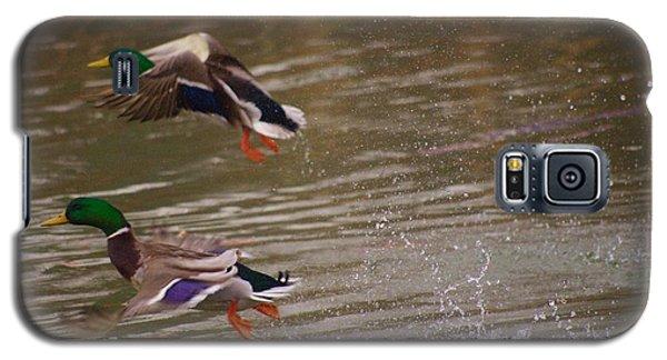 Pair Of Ducks Galaxy S5 Case
