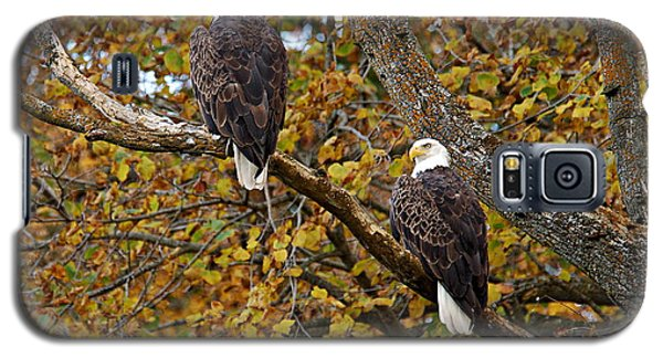 Pair Of Eagles In Autumn Galaxy S5 Case by Larry Ricker