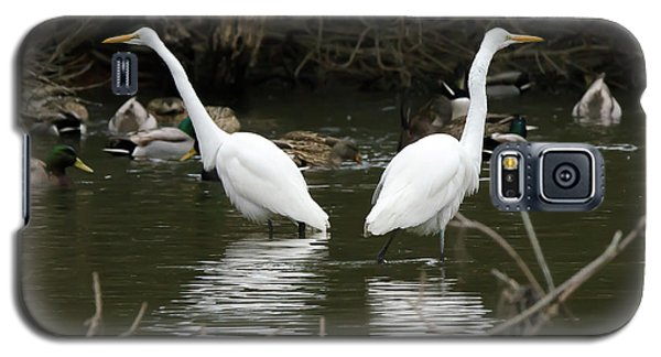 Pair Of Egrets Galaxy S5 Case