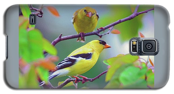 Pair Of Goldfinches Galaxy S5 Case