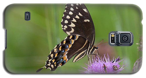 Palamedes Swallowtail And Friends Galaxy S5 Case