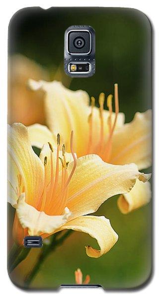 Pale Yellow Galaxy S5 Case