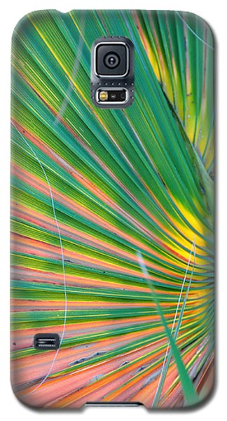 Palm Colors Galaxy S5 Case by Jan Amiss Photography