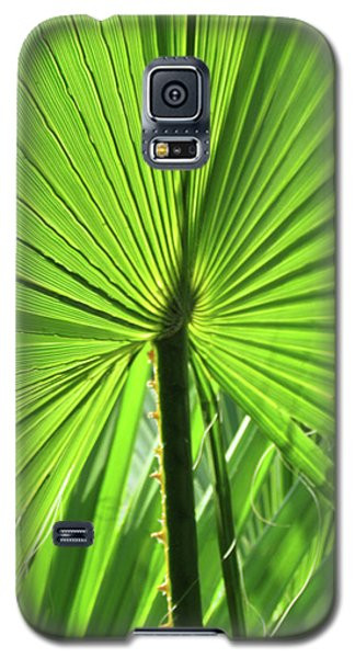Galaxy S5 Case featuring the photograph Palm Frond by Bonnie Muir
