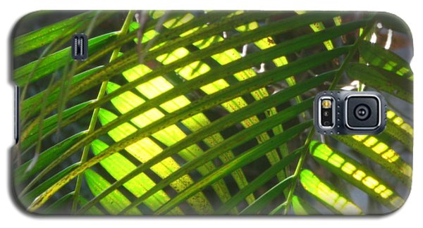 Palm Leaves In Sun Galaxy S5 Case