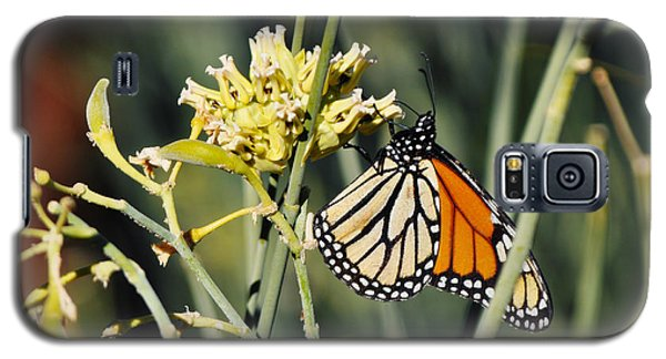 Galaxy S5 Case featuring the photograph Palm Springs Monarch by Kyle Hanson
