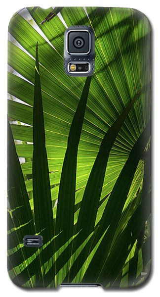 Palm Study 1 Galaxy S5 Case