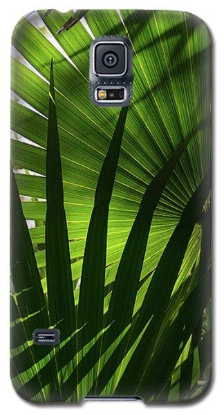 Palm Study 1 Galaxy S5 Case
