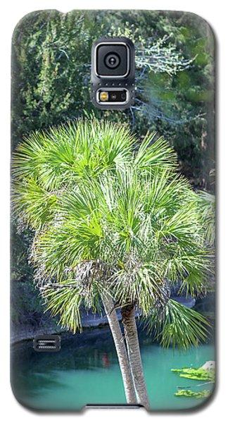 Palm Tree Blue Pond Galaxy S5 Case