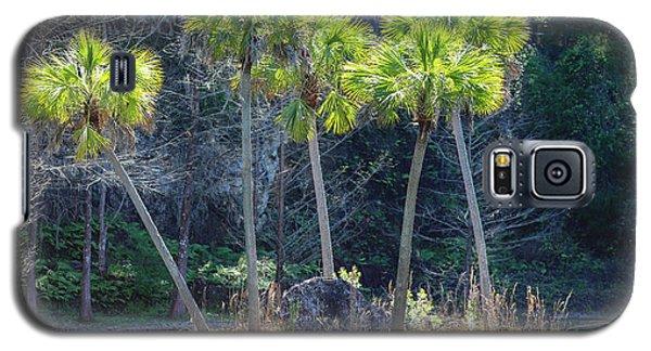 Palm Tree Island Galaxy S5 Case