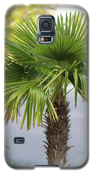 Palm Tree Just There Galaxy S5 Case