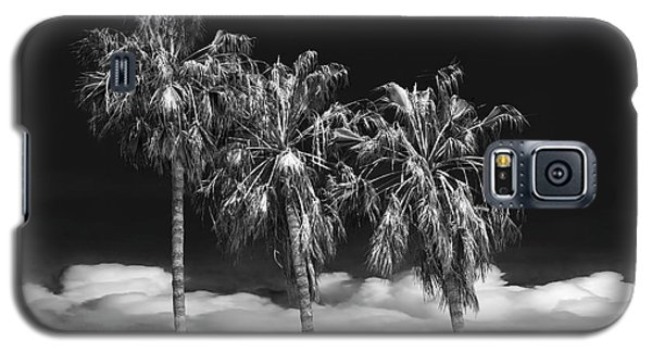 Galaxy S5 Case featuring the photograph Palm Trees In Black And White On Cabrillo Beach by Randall Nyhof