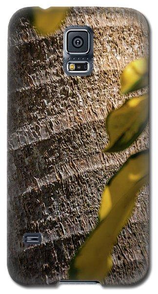 Palm Trunk - Miami Galaxy S5 Case