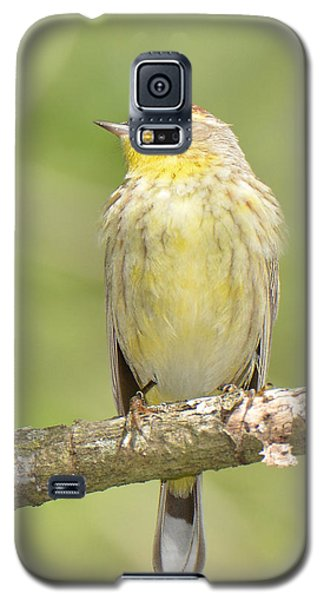 Palm Warbler Galaxy S5 Case by Alan Lenk