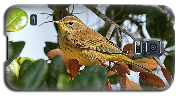 Palm Warbler Galaxy S5 Case