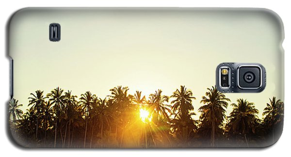 Palms And Rays Galaxy S5 Case