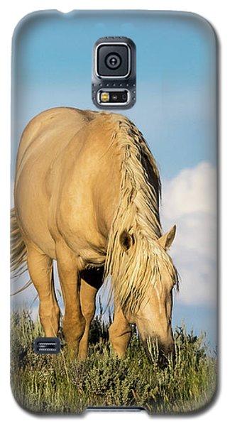 Palomino Wild Stallion In The Evening Light Galaxy S5 Case