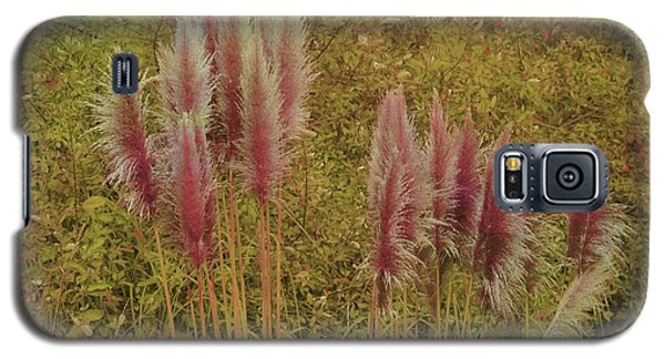 Galaxy S5 Case featuring the photograph Pampas Grass by Athala Carole Bruckner