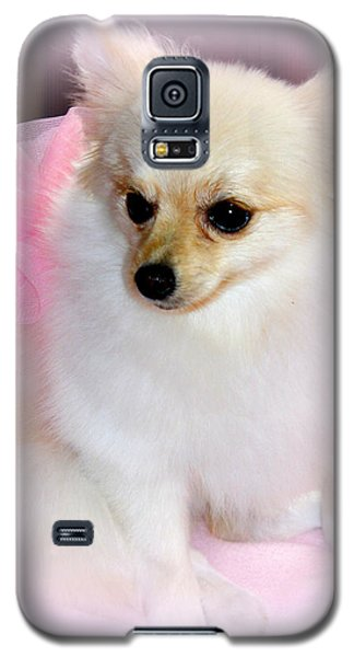 Pampered Pomeranian  Galaxy S5 Case by Kathy  White