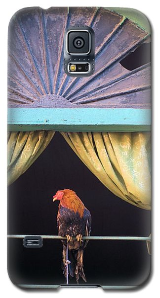 Panama Roaster 1 Galaxy S5 Case by Douglas Pike