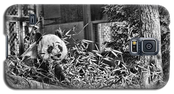 Panda Feast Galaxy S5 Case