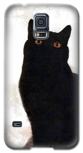 Panther The British Shorthair Cat Galaxy S5 Case