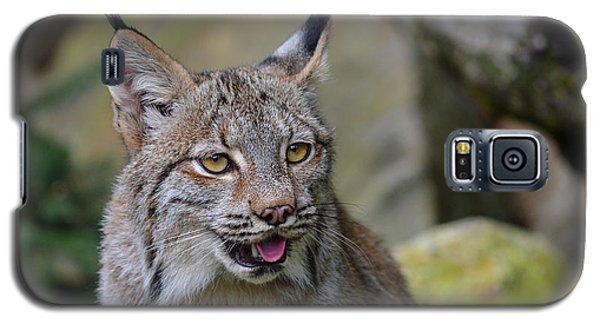 Panting Lynx Galaxy S5 Case