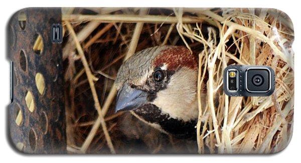 Papa Bird Galaxy S5 Case