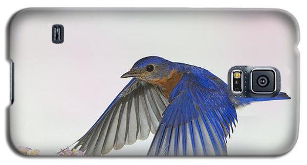 Papa Blue Galaxy S5 Case