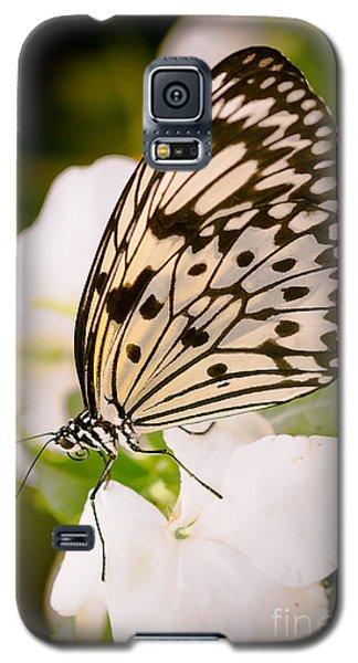 Paper Kite On White Galaxy S5 Case