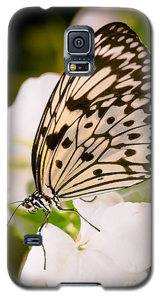 Paper Kite On White Galaxy S5 Case