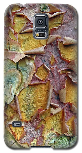 Paperbark Maple Tree Galaxy S5 Case