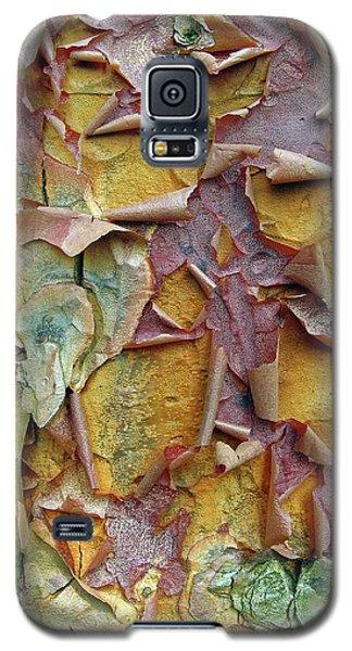 Paperbark Maple Tree Galaxy S5 Case