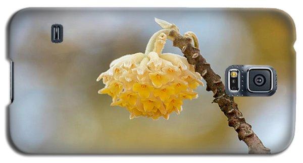 Paperbush Flower Galaxy S5 Case