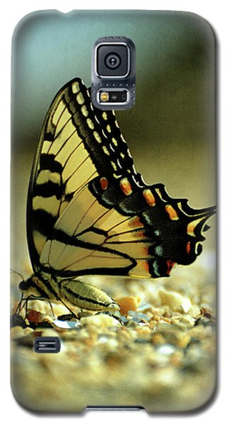 Papilio Glaucus Eastern Tiger Swallowtail Galaxy S5 Case