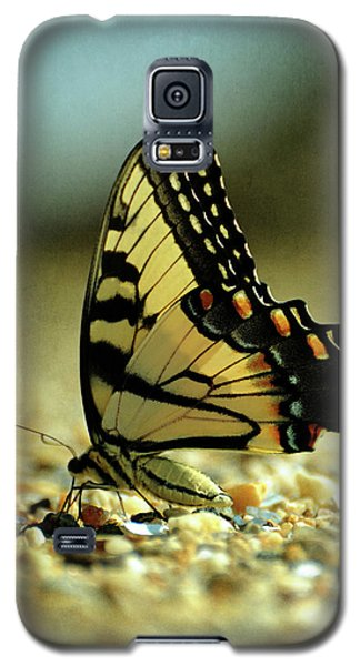 Papilio Glaucus Eastern Tiger Swallowtail Galaxy S5 Case by Rebecca Sherman