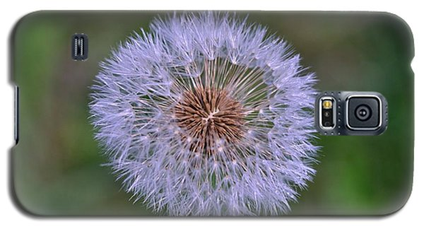 Parachute Club- Dandelion Gone To Seed Galaxy S5 Case by David Porteus
