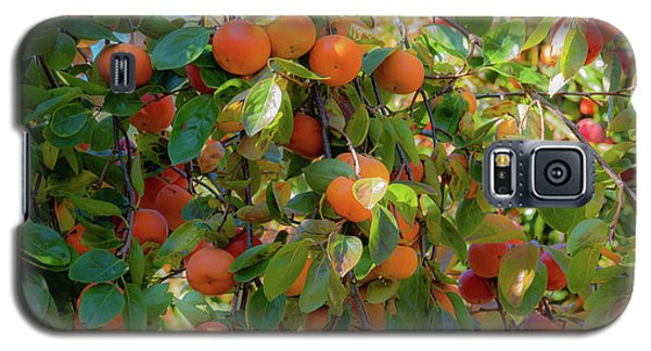 Paradise For Persimmons Galaxy S5 Case