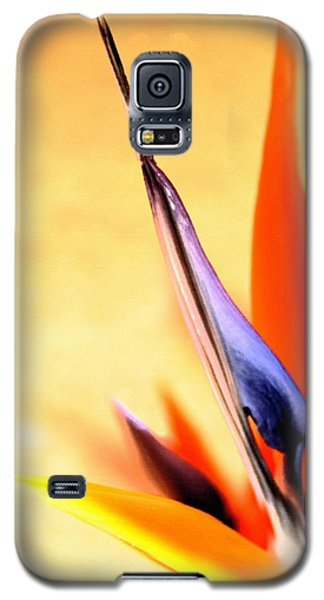 Galaxy S5 Case featuring the photograph Paradise Lost by Marion Cullen