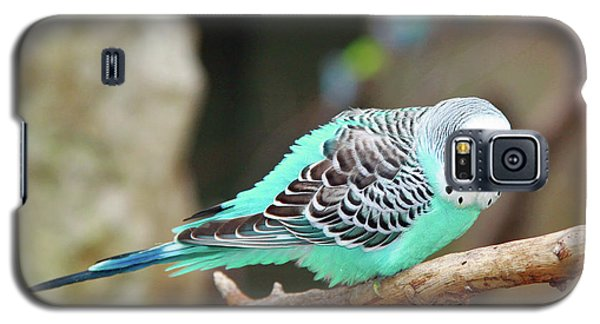 Parakeet  Galaxy S5 Case
