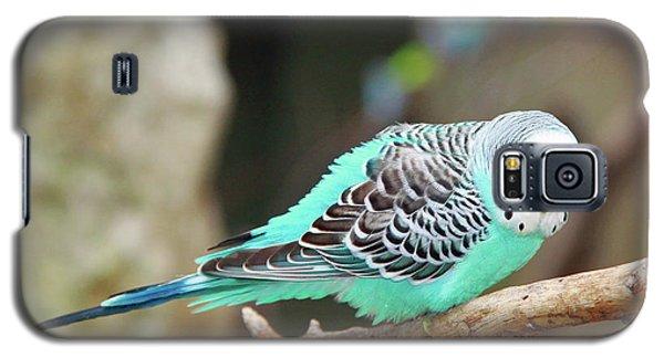 Parakeet  Galaxy S5 Case